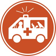 participer--ambulancier